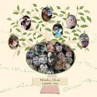 Monkey Mom Family Tree