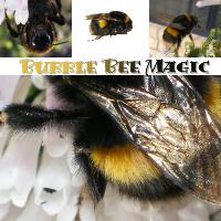 Bumble Bee Magic