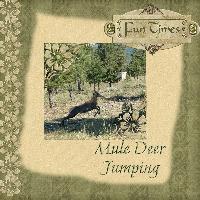 Mule Deer Jumping