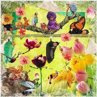 Fairy's in my Garden