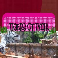India's Tigers