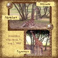 Out of Africa_fossil rim tx