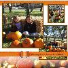 Pumpkin Patch 2006
