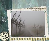 Fog in my village