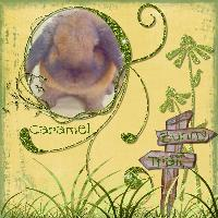 Adorable Rabbits: