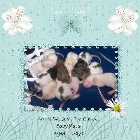 Baby Rats