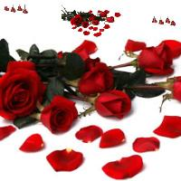 the love in a rose