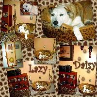 My Lazy Daisy