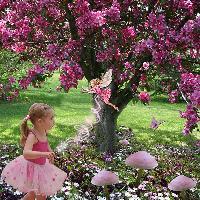 The Apple Blossom Fairy