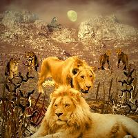 Two lions