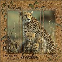 Beauty Of Freedom