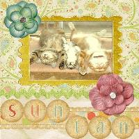 Suntanning Cats