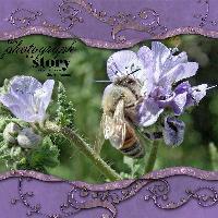 BEE HAPPY AS A FLOWER