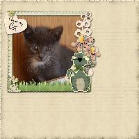 I Love My New Kitty