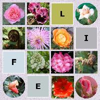 Life of Flowers