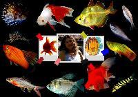 My Fish Gurl