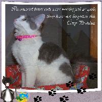 Feline Royalty