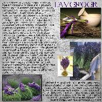 Herblore - Lavender