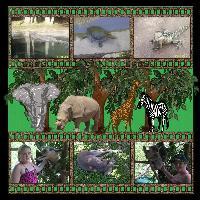 A Day at Australia Zoo.