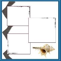 sea schell
