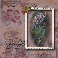 Sparrow the Song Bird