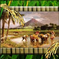 Vintage Country Life: Planting Rice