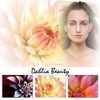 A Dahlia Beauty