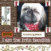 Cooper The Bandito
