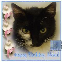 Happy Birthday, my Cat!