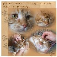 Your cat and you..