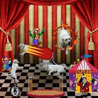 Cooper's adventure - joining the circus