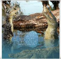 Aussie Salt Water Croc