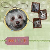 Our Pet Millie
