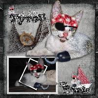 My Pirate Tyron (my cat)