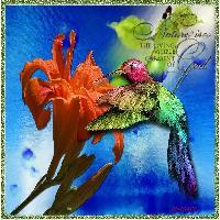 The Glass Hummingbird