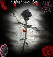 dying black rose