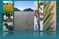 Wild North West Coast NZ