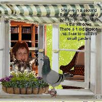 A pigeon in our window garden