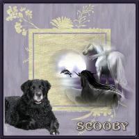 Scooby Purple
