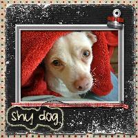 Shy dog
