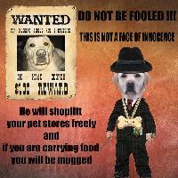wanted : for shoplifting and mugging