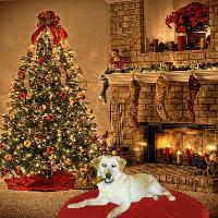Brandi's Christmas gift