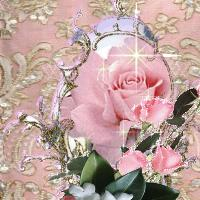 pink lace , pink roses