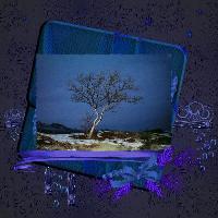 Dwarf Birch In Blue