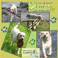 praiseworthy pups - Cooper in action