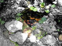 My Sister's Pond