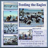 Feeding the Eagles