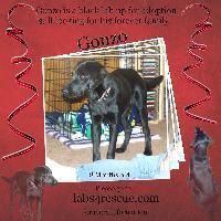 Gonzo & Grace