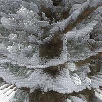Pine Tree Palooza