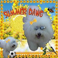 Summer Dawg